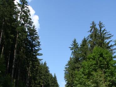 Fot. http://www.morguefile.com/