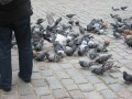 fot. BirdSystem